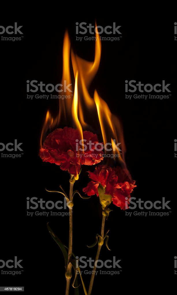 Flaming Flowers stock photo