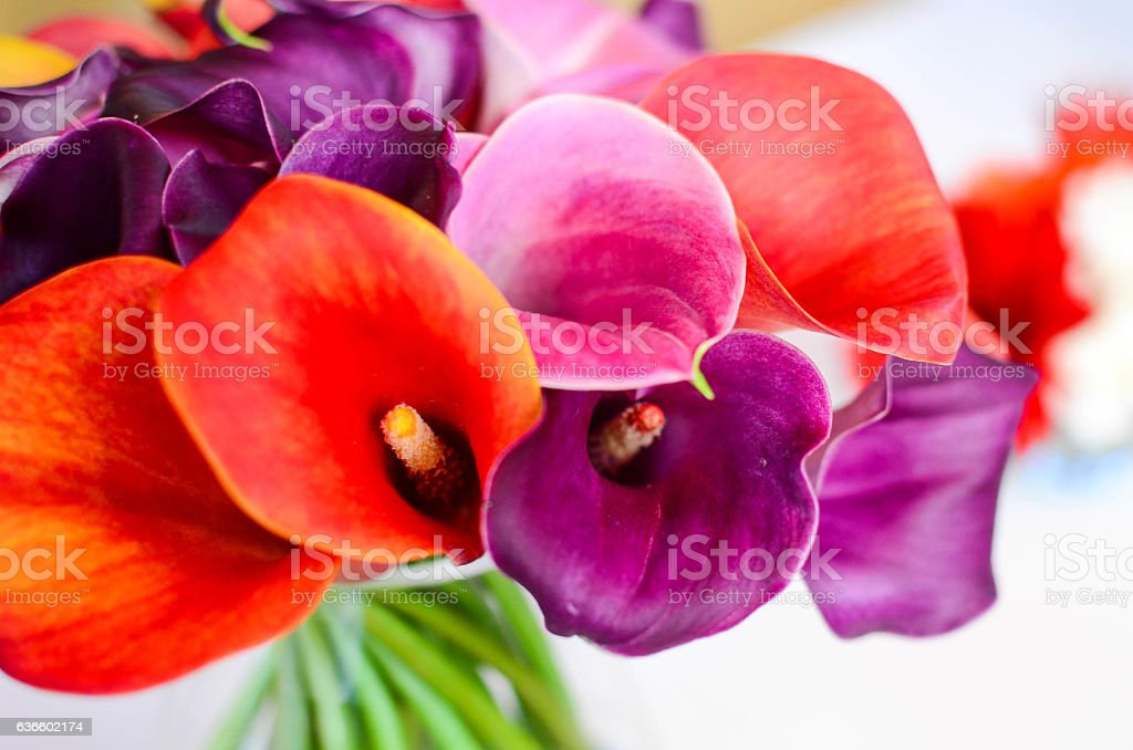 Flamingo flower stock photo