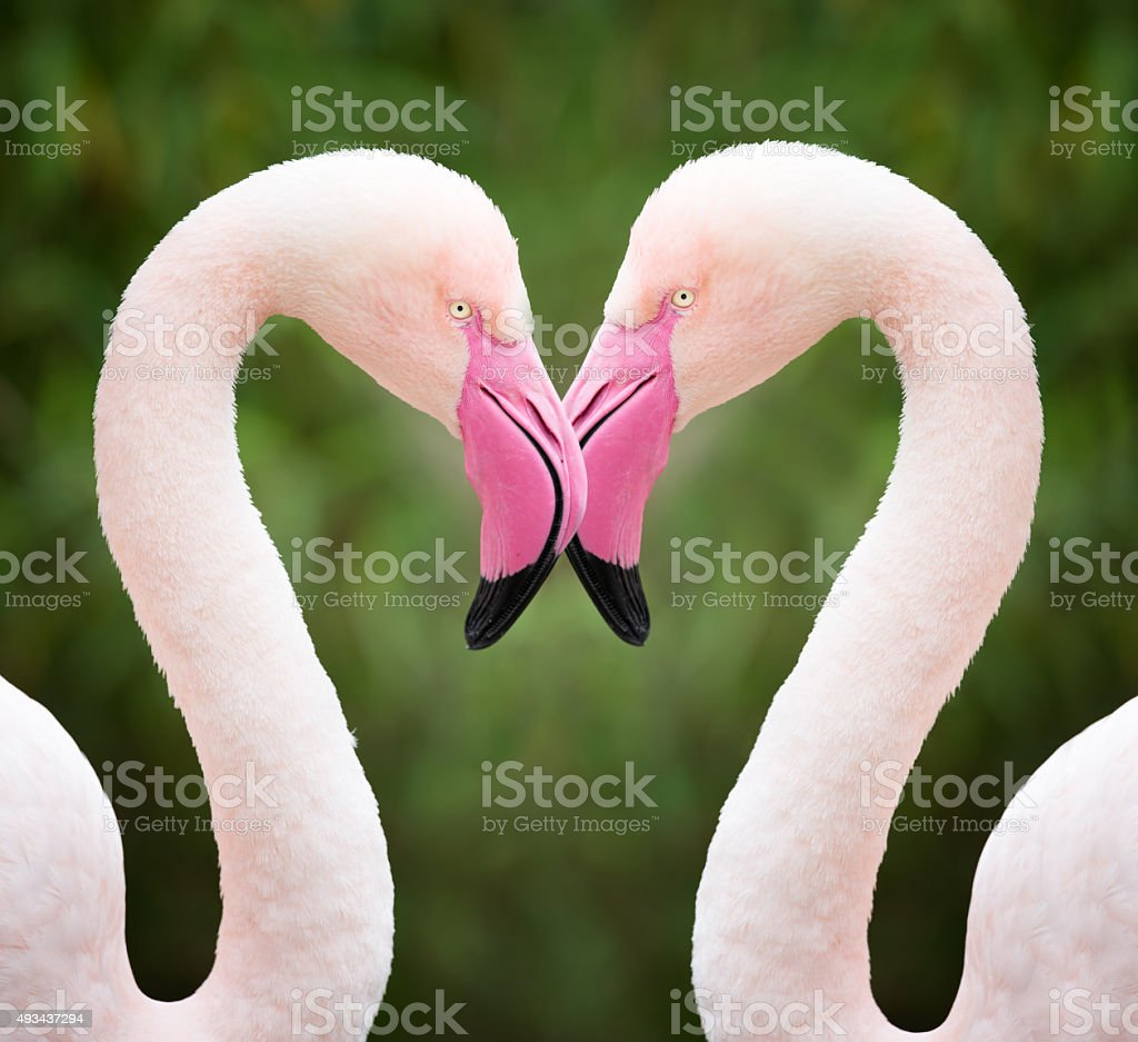 Flamingo Heart, Love stock photo