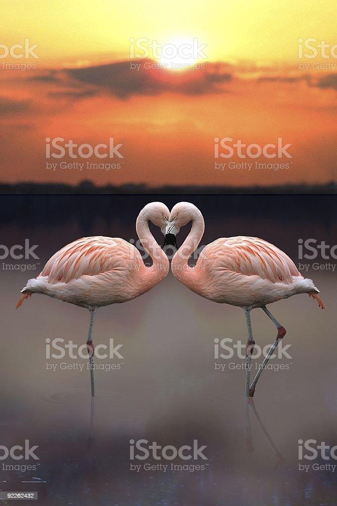 Flamingo Heart stock photo