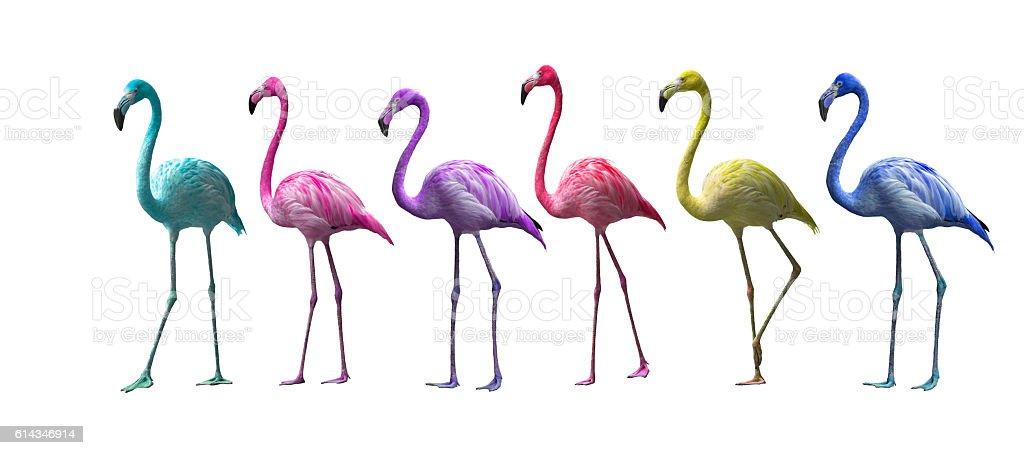 flamingo isolé sur fond blanc photo libre de droits