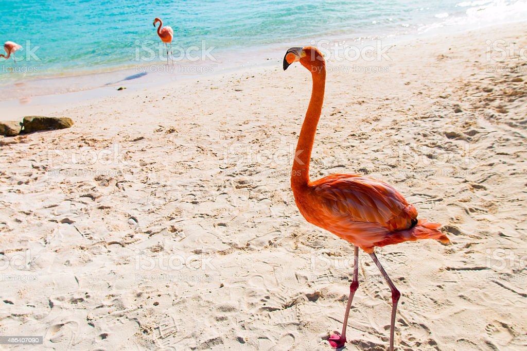 Flamingo looking out stock photo
