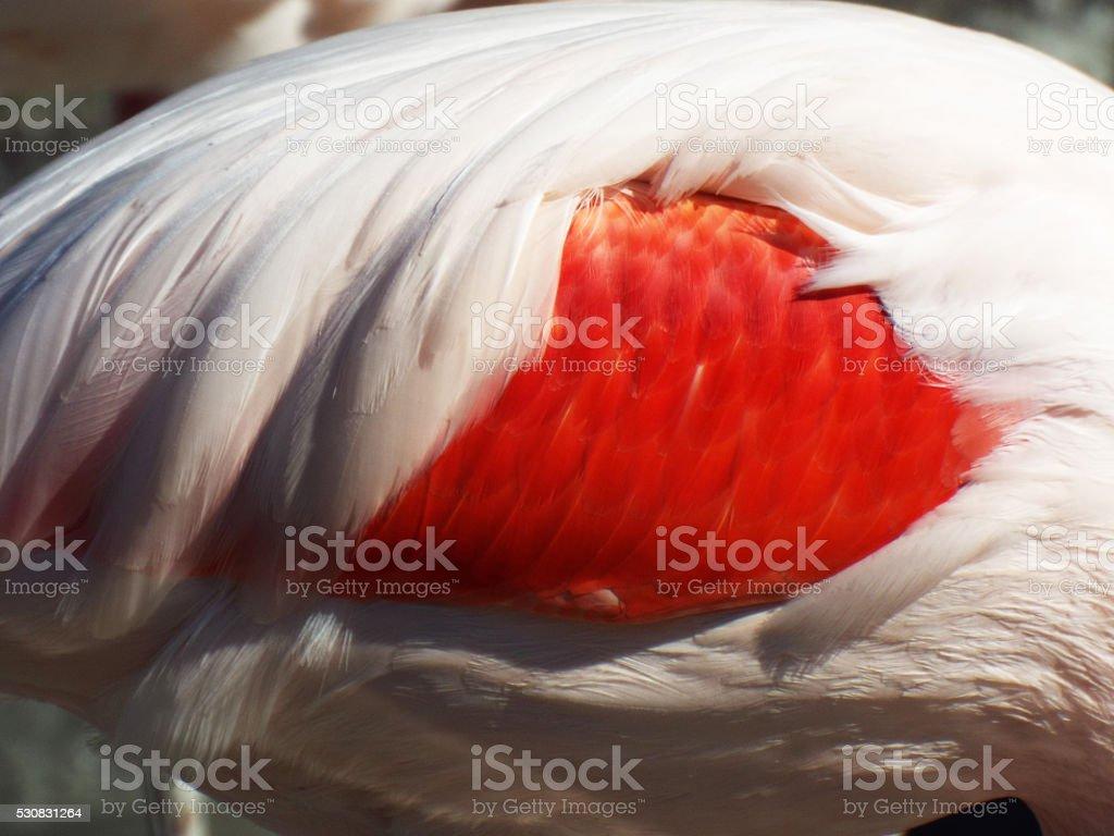 Flamingo photo libre de droits