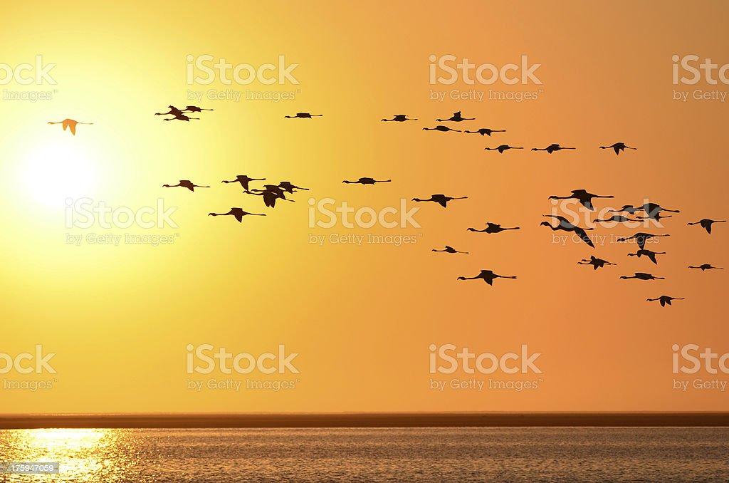 Flamingo Sunset stock photo