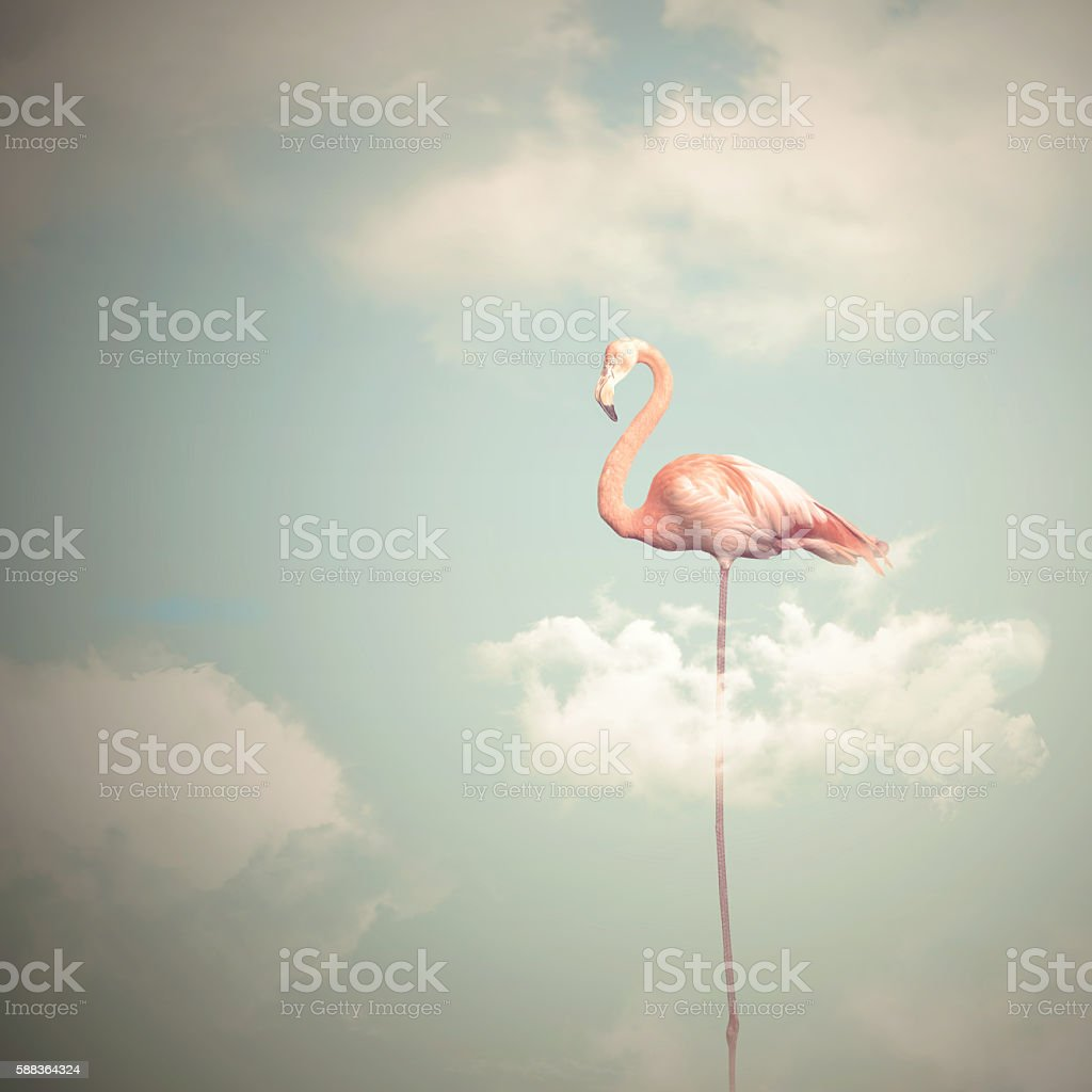 Flamingo with long legs on a cloudy sky background stock photo