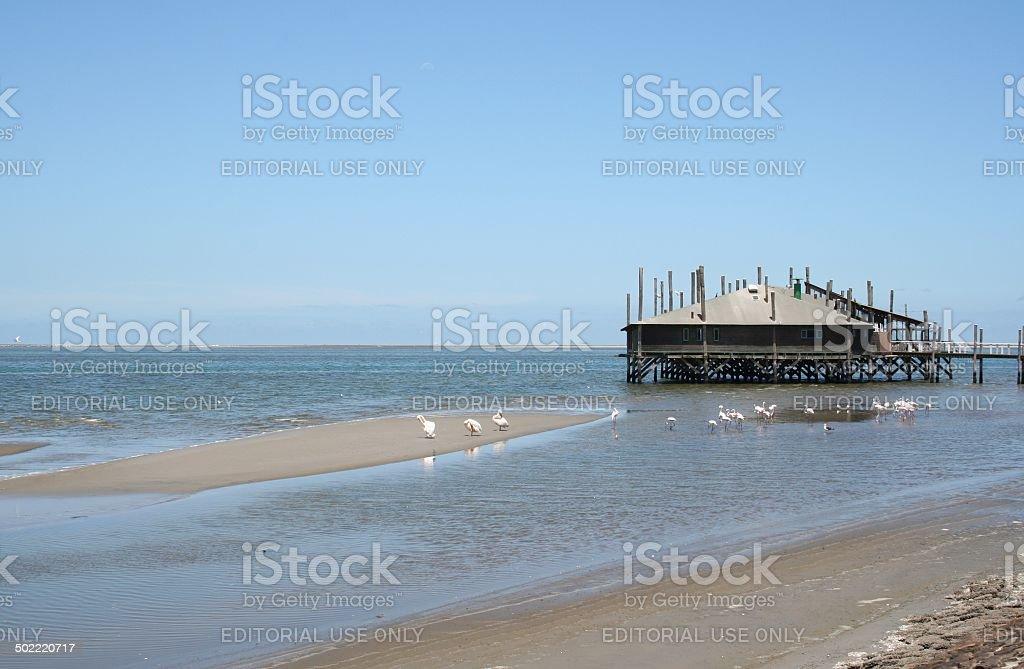 Flamingos and Pelicans, Lagoon of Walvis Bay, Namibia, Africa stock photo