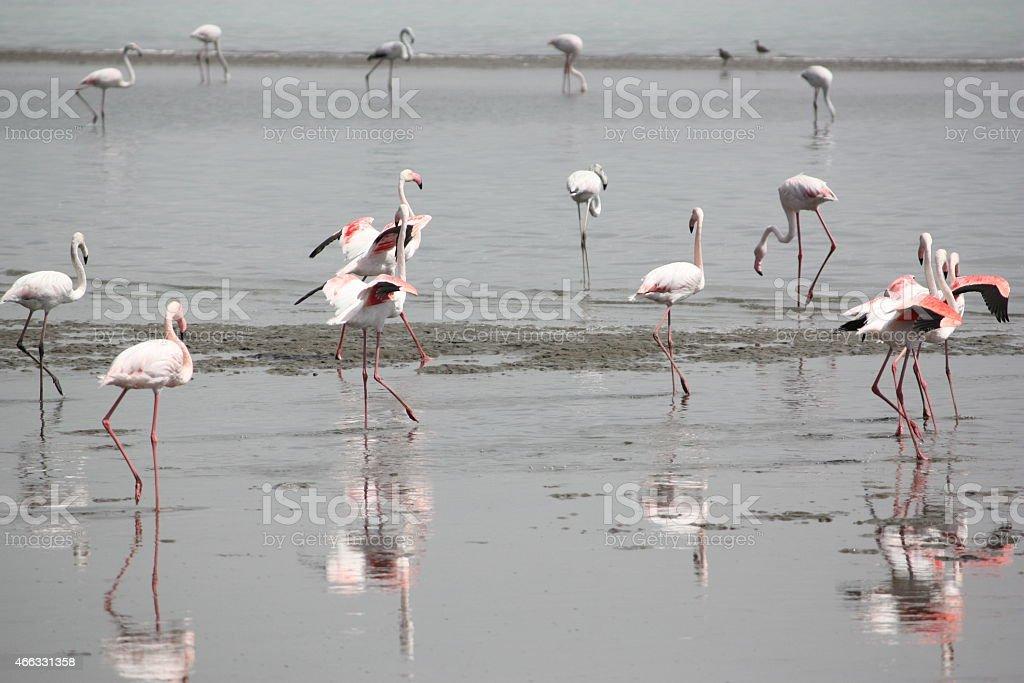 Flamingos in Namibia stock photo