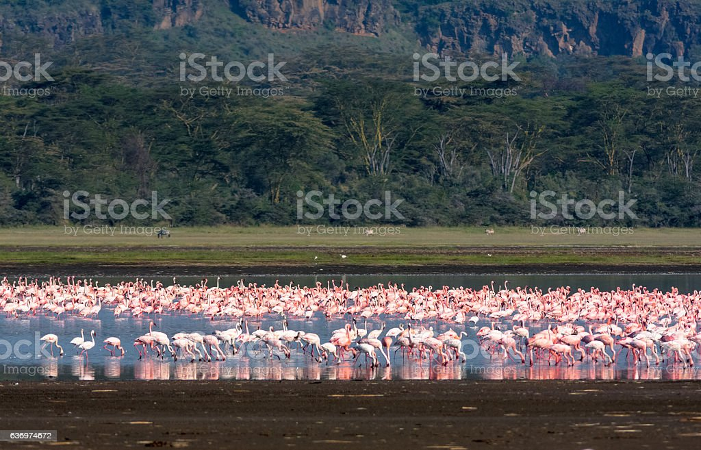 Flamingos. Nakuru landscape. Lake Nakuru, Kenya stock photo