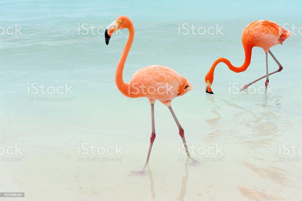 flamingos on a tropical island stock photo