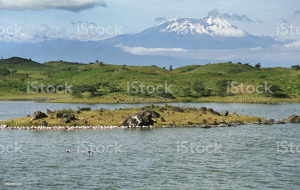 Flamingos on lake and Mount Killimanjaro Tanzania stock photo