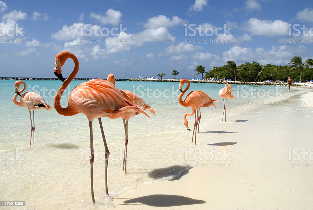 Flamingos on the Beach stock photo