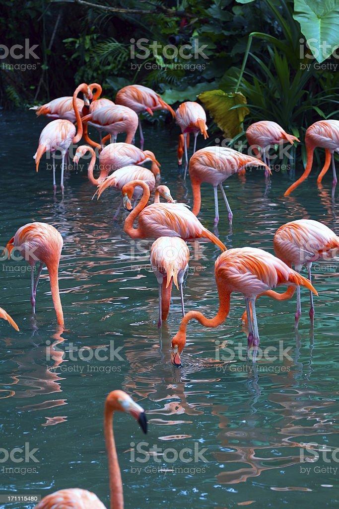 Flamingos stock photo