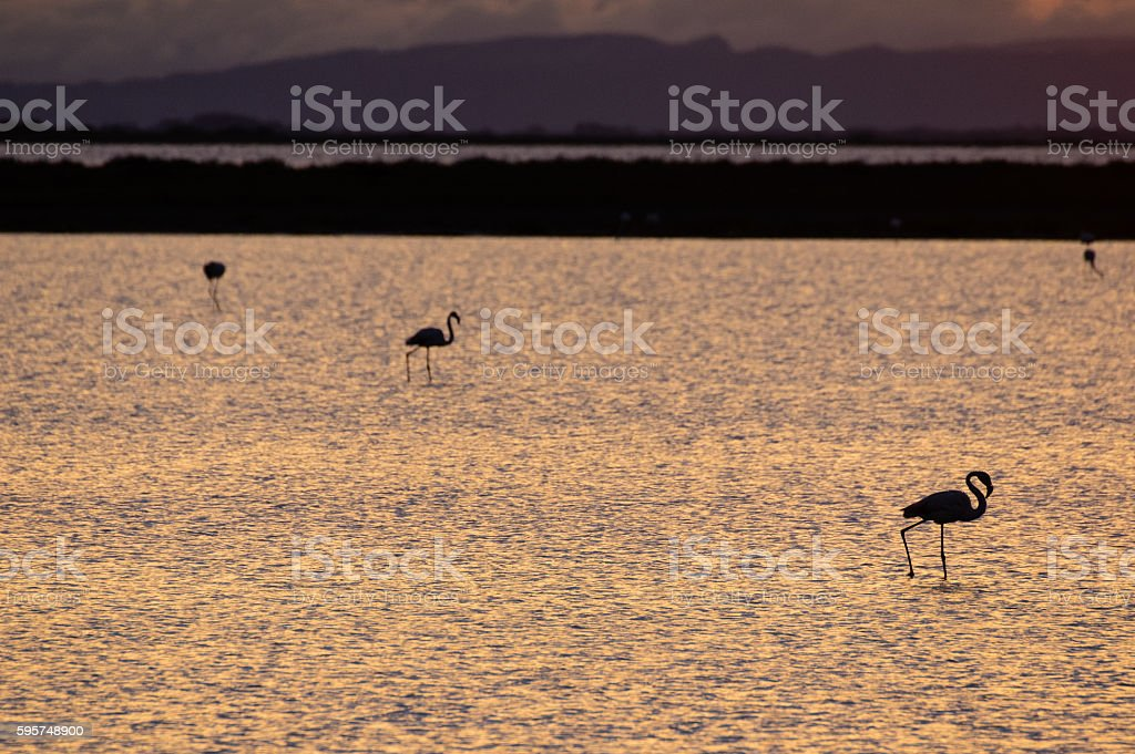 Flamingos silhouette stock photo