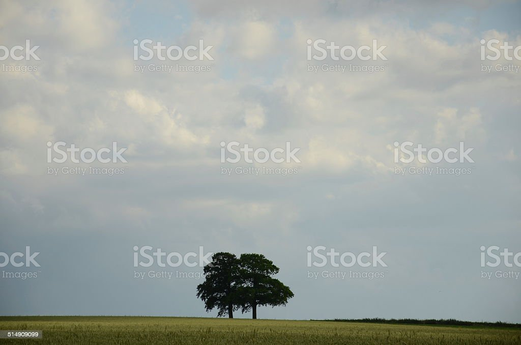 Flanders Landscape, Belgium stock photo
