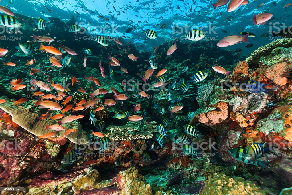 Flash Mob at the Reef? Komodo National Park, Indonesia stock photo
