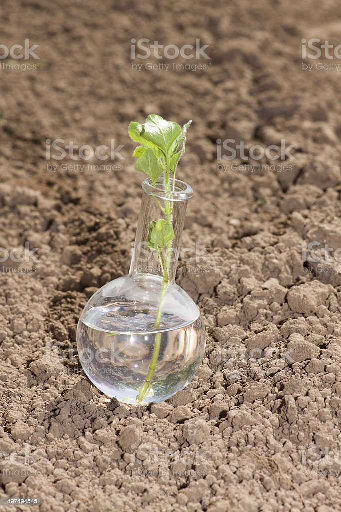 flask with clear water and plant on dry soil royalty-free stock photo