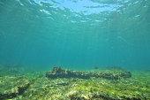 Flat bottom in shallows