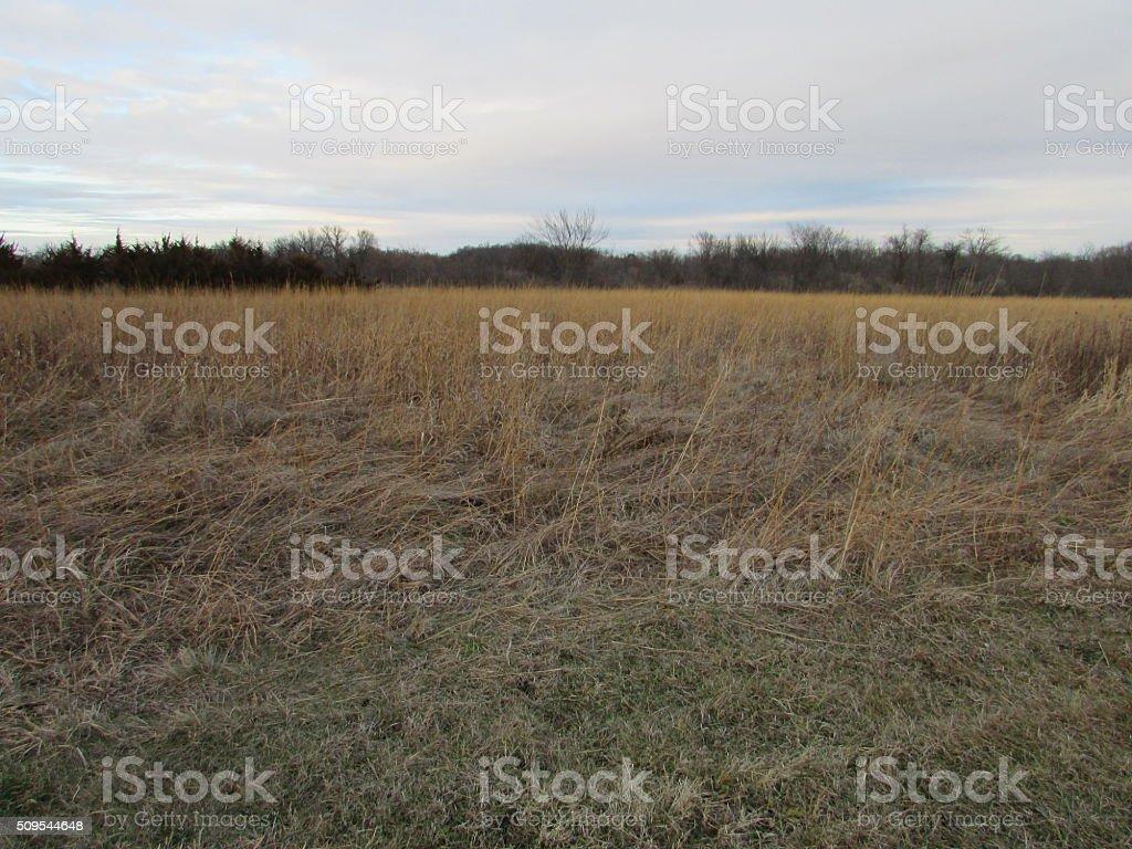 Flat Grassland stock photo