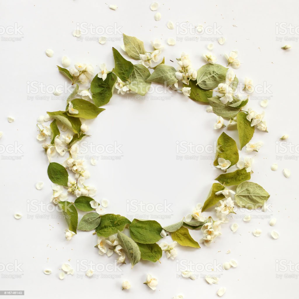 Flat lay border frame with white jasmin flowers, buds and green branches on white background. Round shape, top view. stock photo