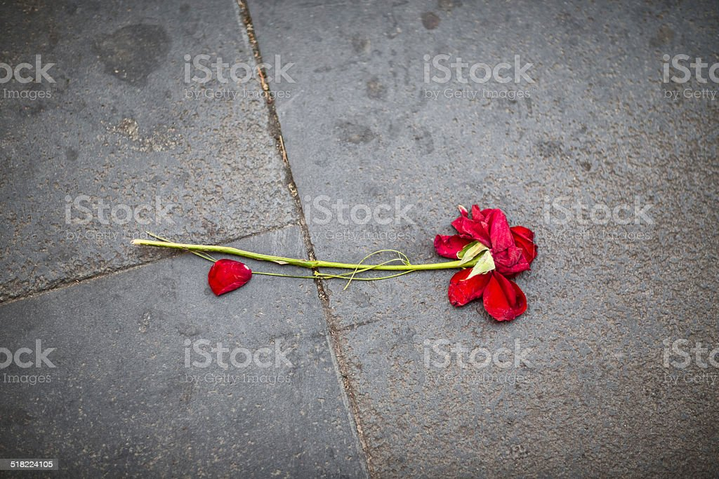 Flat rose on the pavement in Rome, Italy stock photo