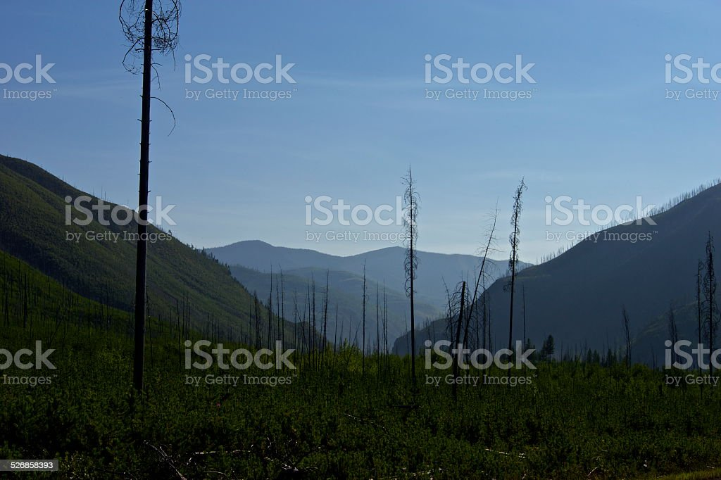 Flathead Forest Edge stock photo