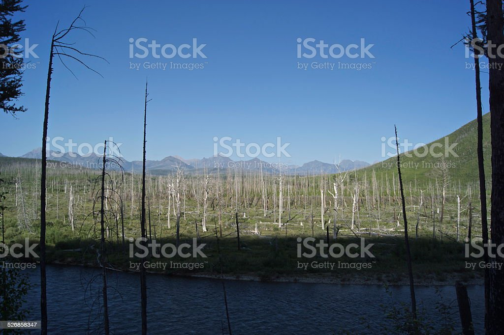 Flathead River Shadow stock photo