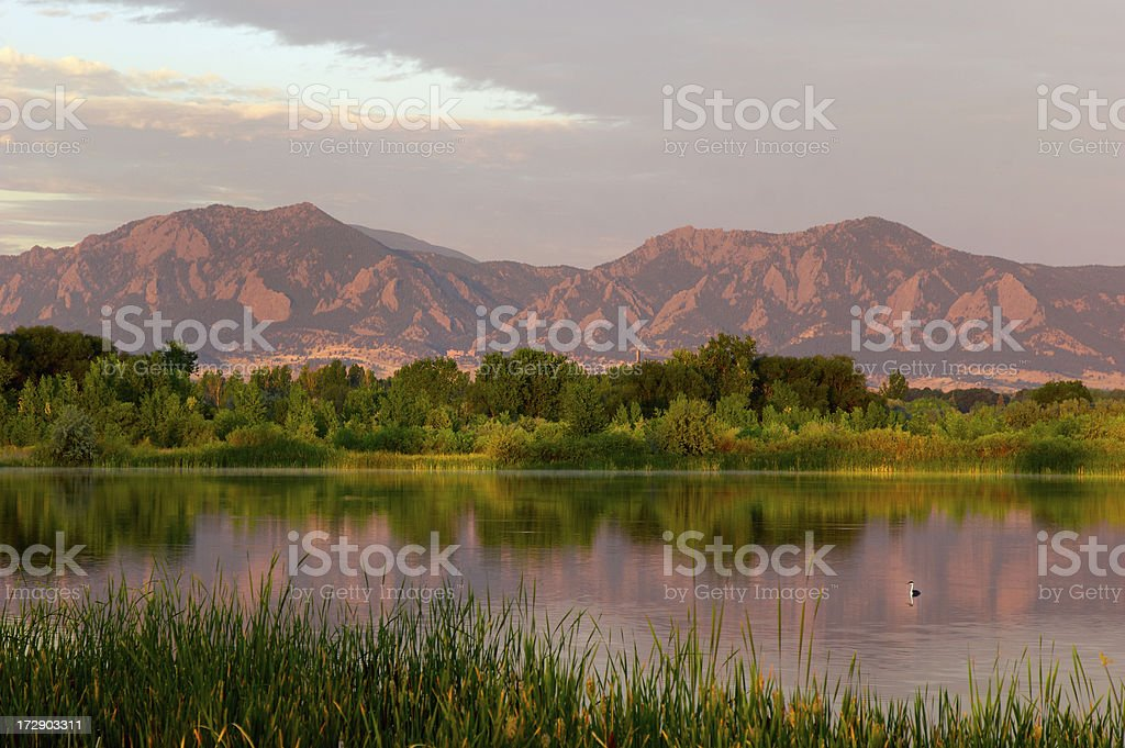 Flatirons at Dawn with Swimming Bird stock photo