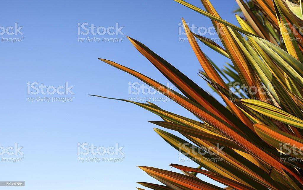 Flax against blue sky. stock photo