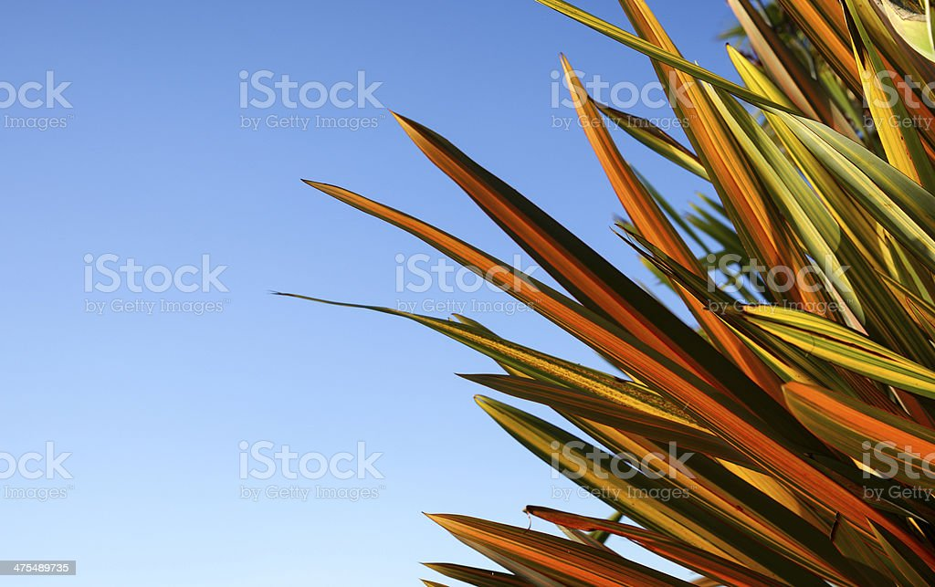 Flax against blue sky. stock photo