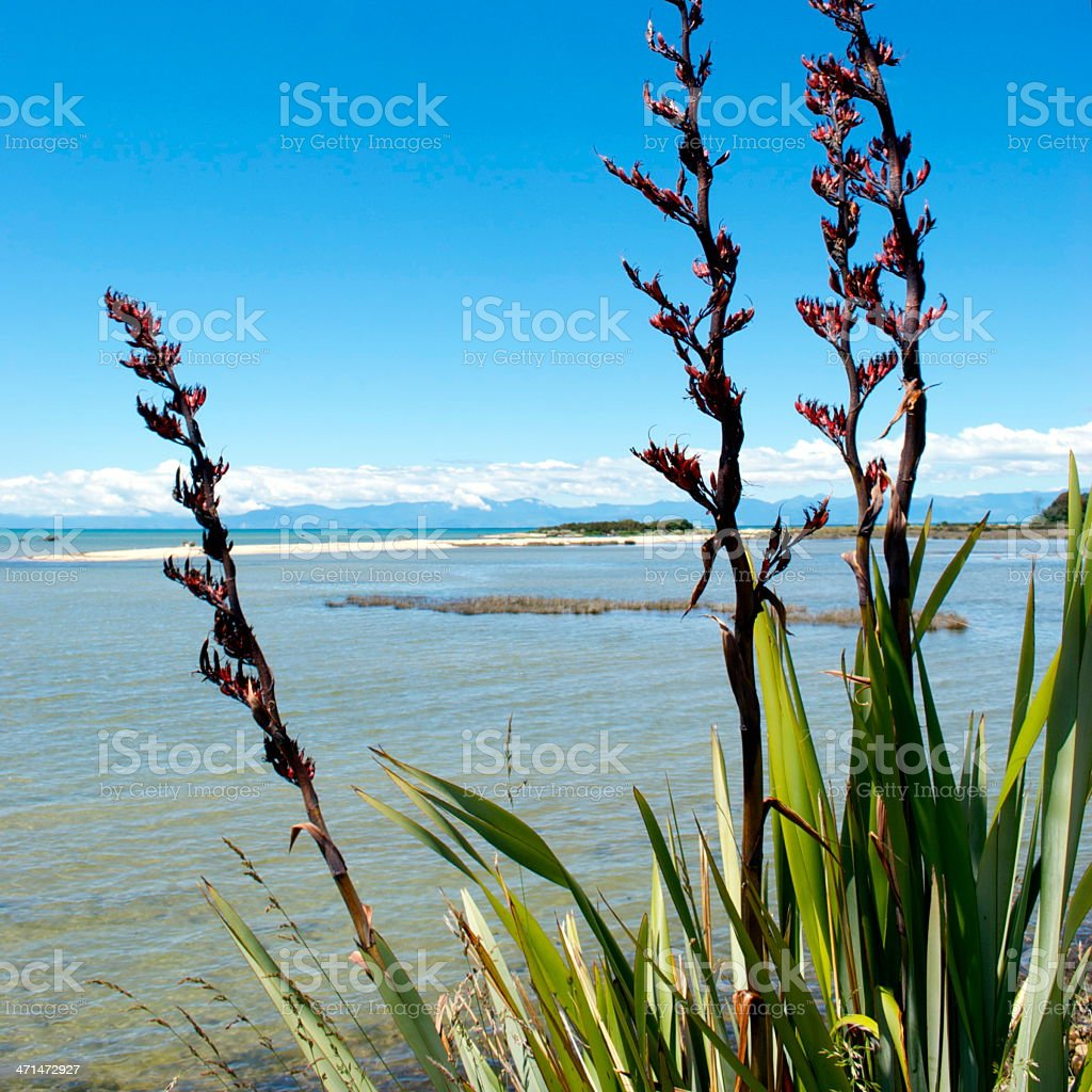 Flax Bushes on the Abel Tasman National Park, New Zealand stock photo