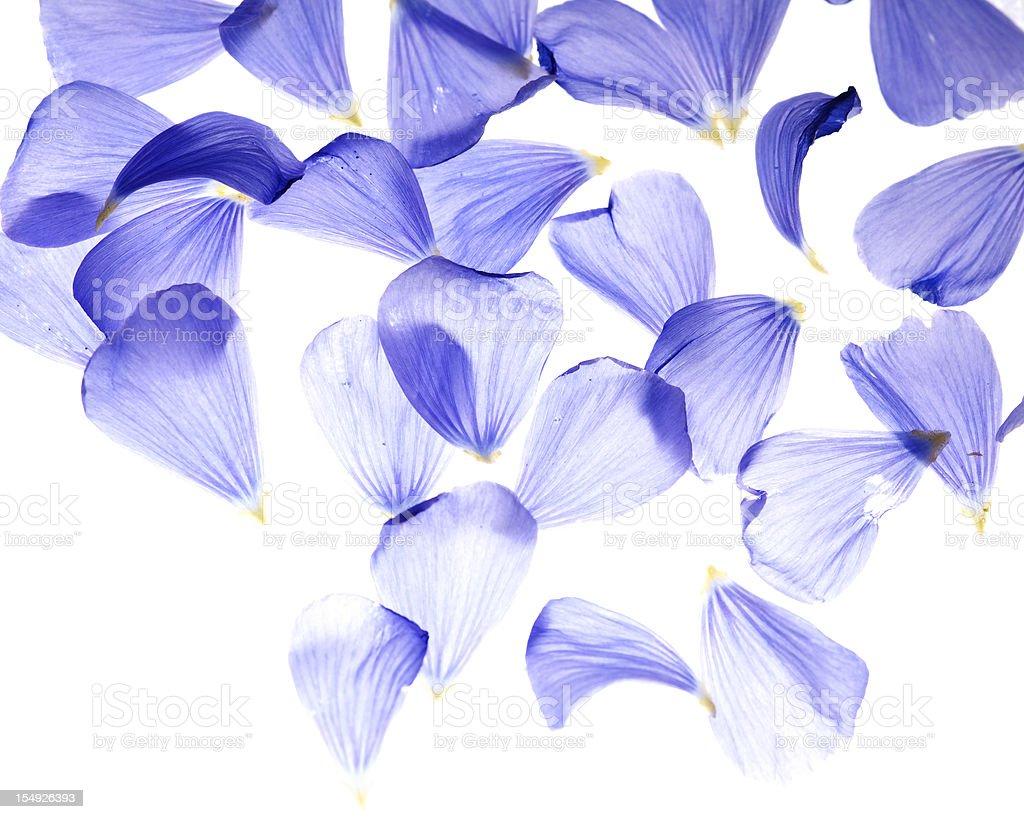 Flax flower petals stock photo