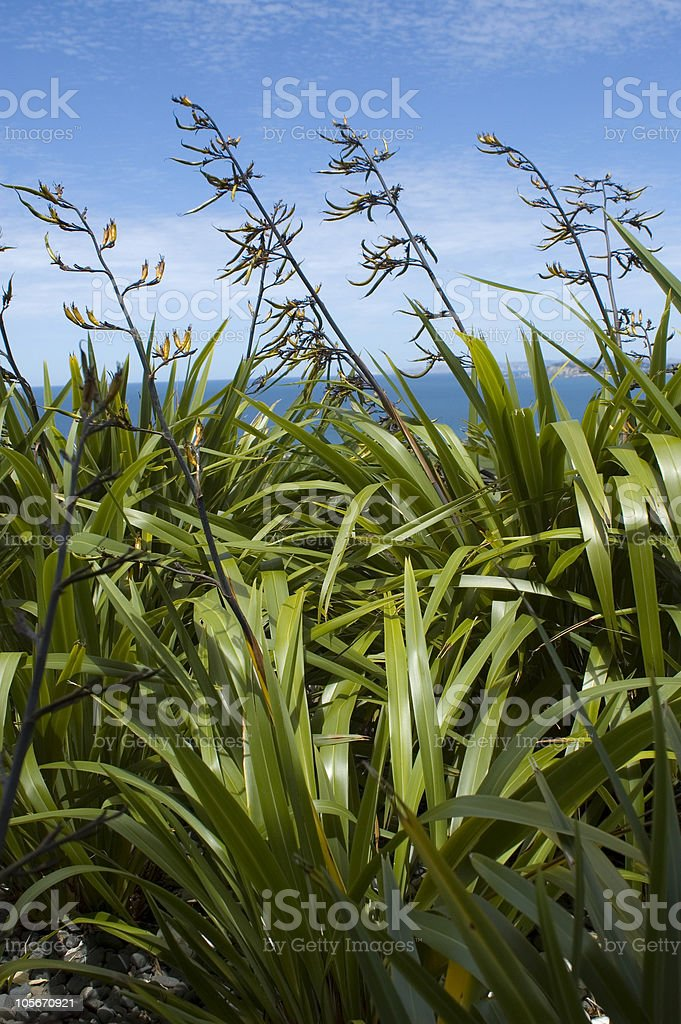 Flax stock photo