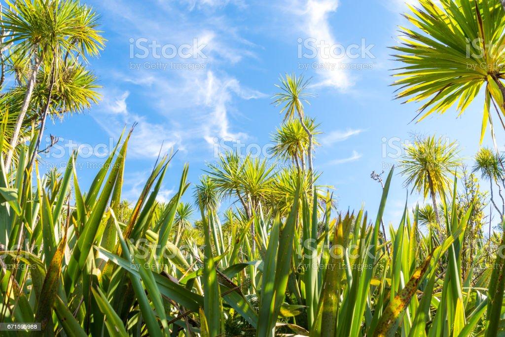 Flax Tiritiri Matangi stock photo