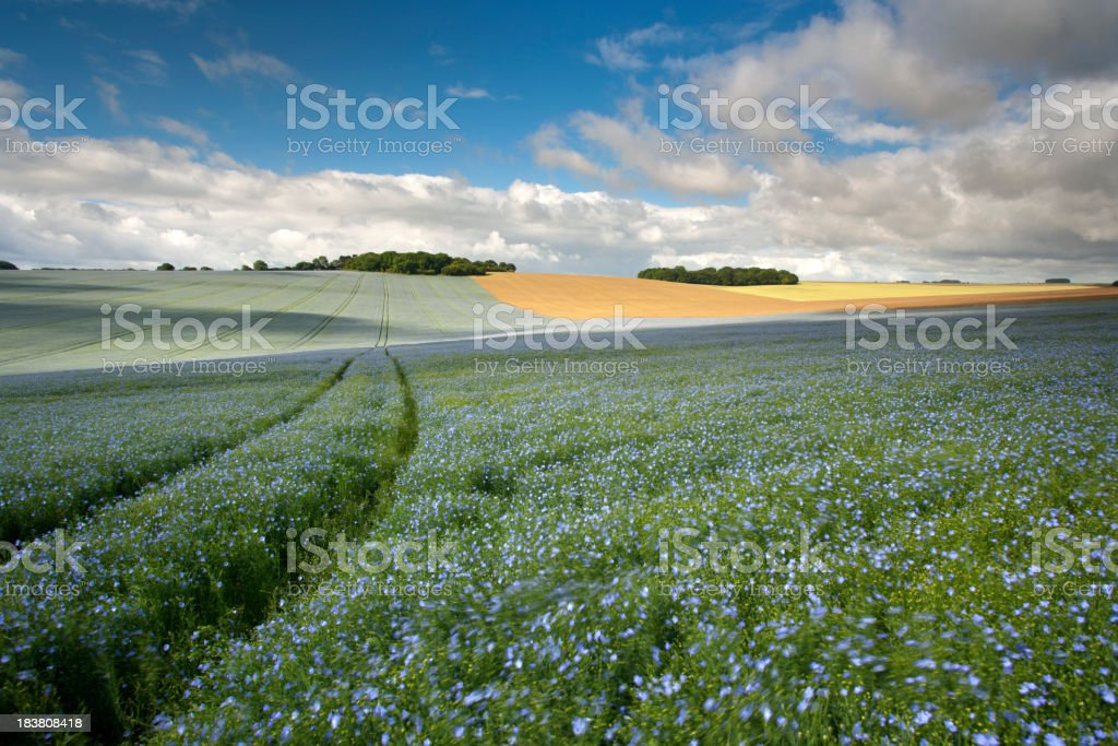 Flaxfield Downland stock photo