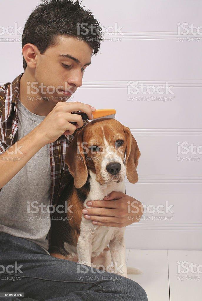 Flea Combing stock photo