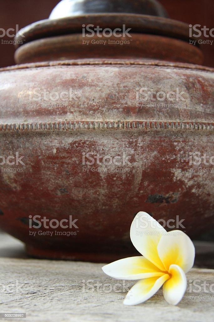 Fleur de paix stock photo