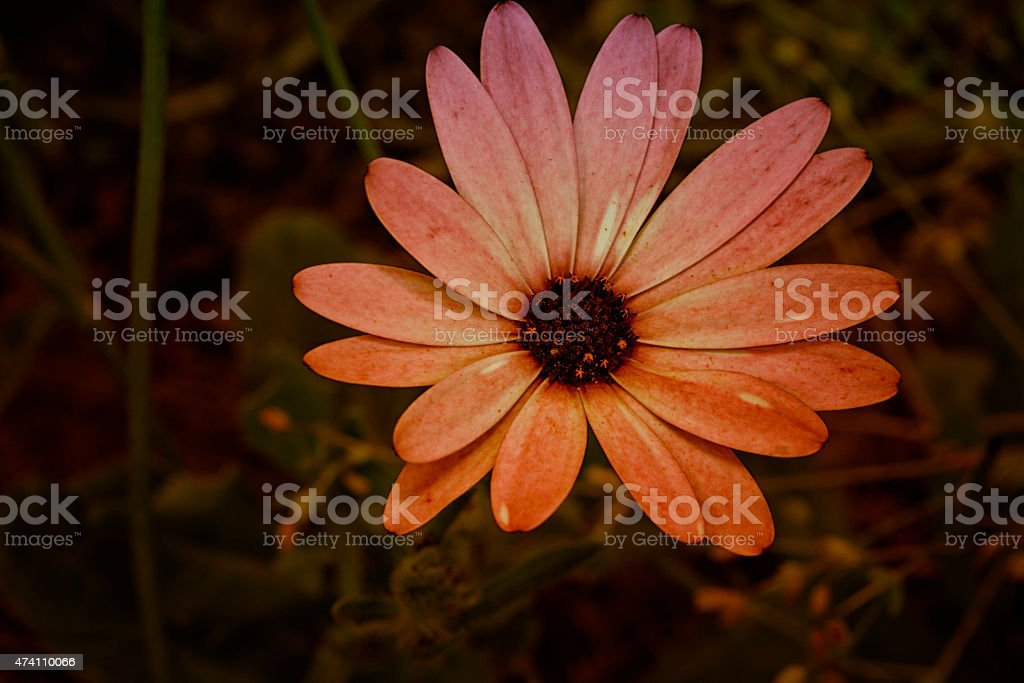 Fleur de printemps stock photo