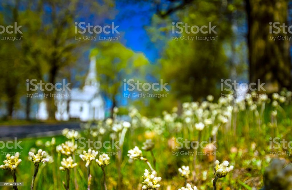 Fleurs sauvages stock photo