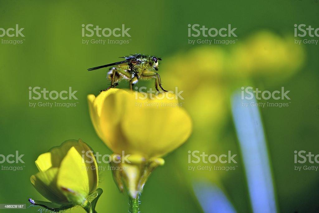 Fliege auf der Blüte stock photo