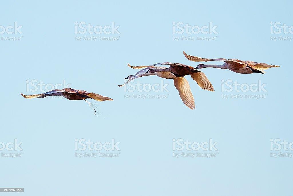 Fliegen 2. Klasse stock photo