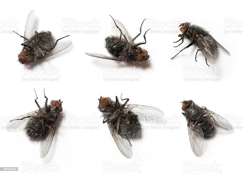 Flies on white background stock photo