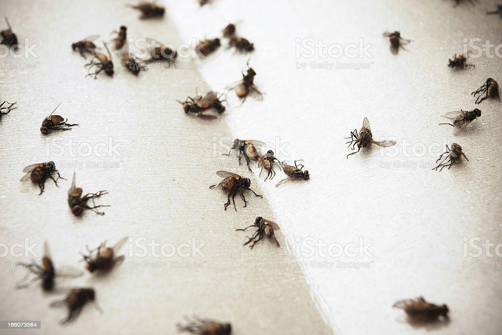 Flies royalty-free stock photo