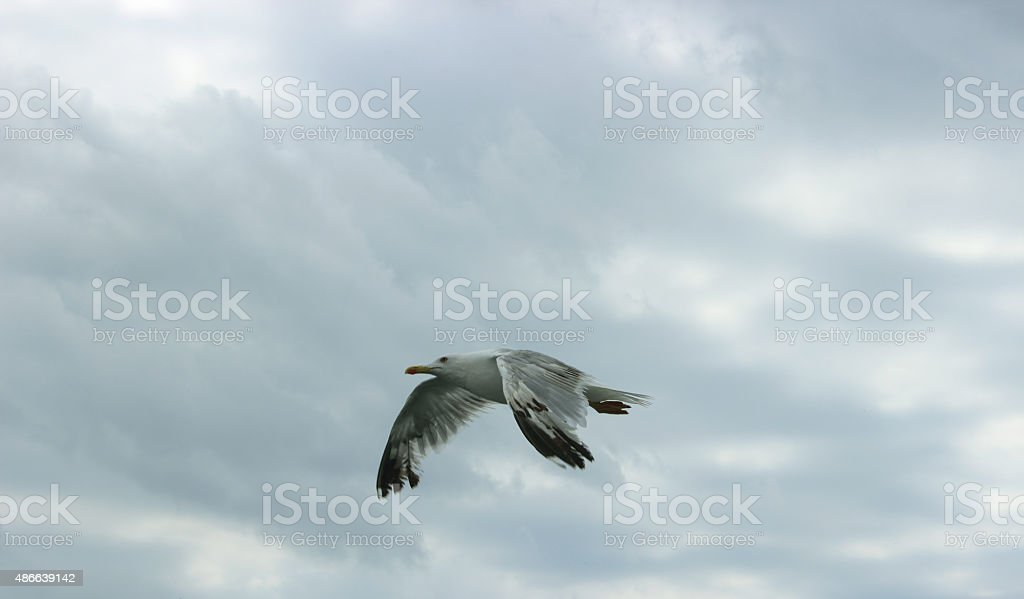 Flight from last forces stock photo