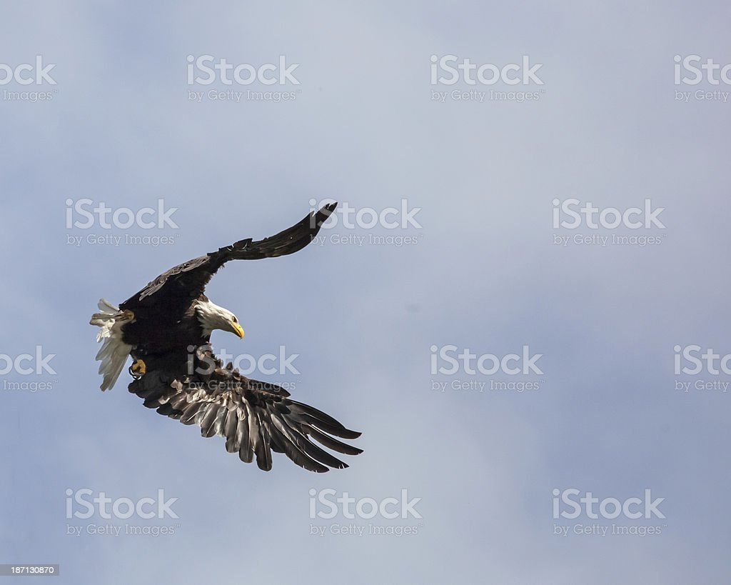 Flight of the Eagle I stock photo