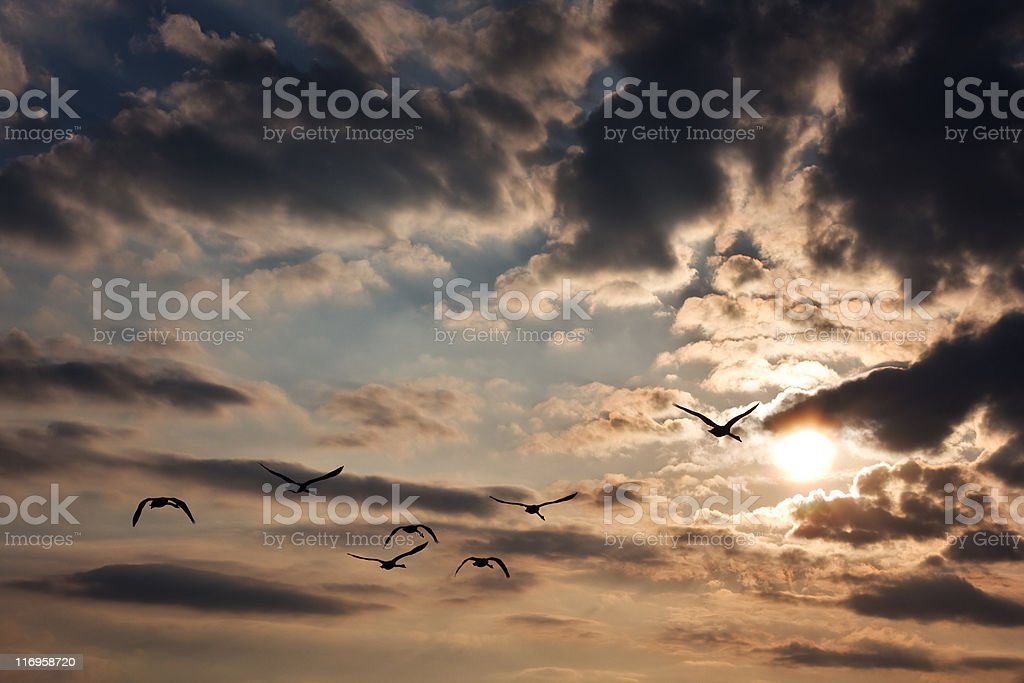 Flight of the geese royalty-free stock photo