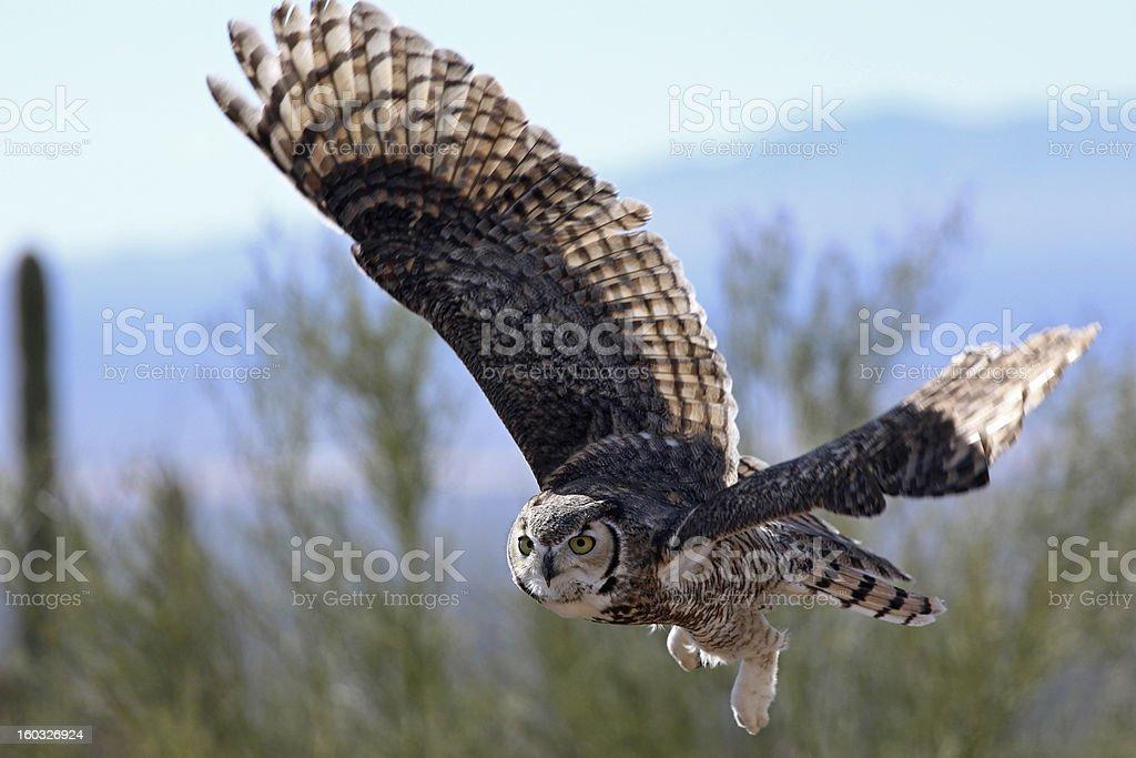 Flight Over the Desert stock photo