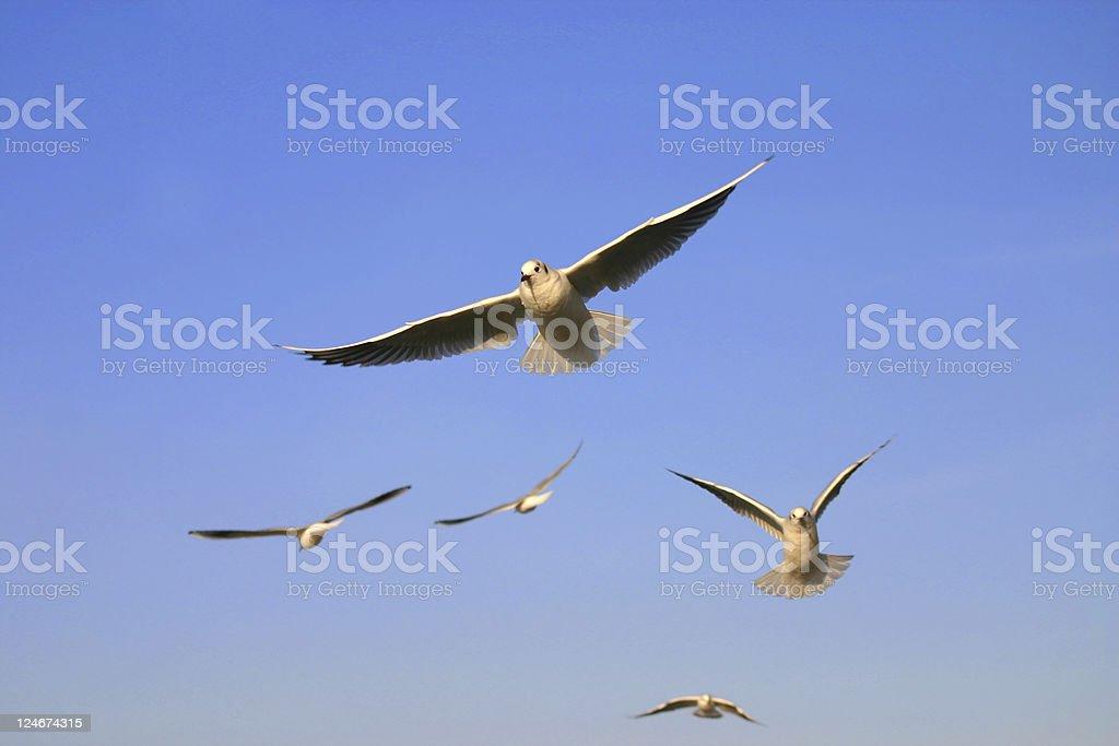 Flight royalty-free stock photo