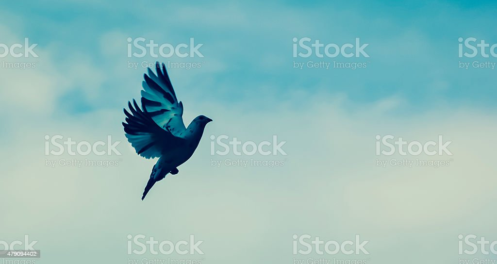 Flight to Freedom stock photo