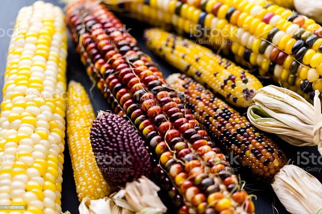 Flint corn stock photo