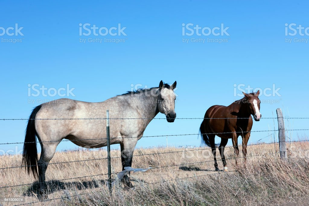 Flint Hills Two Horses stock photo